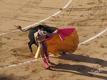 Corrida de www.tommasosanguigni.it