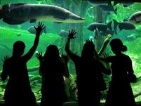 """""""Under the Sea""""Acquario di Barcellona di Lic.Alejandra Piña"""