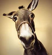 e l'asino..in spagnolo..el burro!